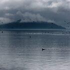 Shrouded in Mist by Varinia   - Globalphotos