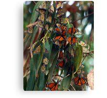 Migrating Monarchs Canvas Print