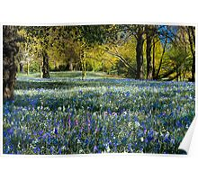 Beautiful Bluebells Poster