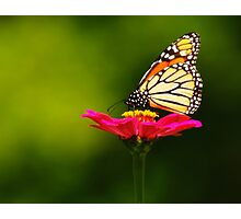SEPTEMBER MONARCH Photographic Print