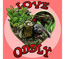 LOVE ODDLY (pink) Photographic Print