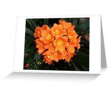 Orange Blossom Greeting Card