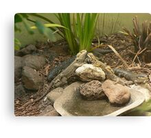 """""""Compilation of Lizards"""" Canvas Print"""