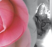 The purr and the petal by Plum