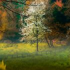 Misty Autumn Meadow by Mark Bowden