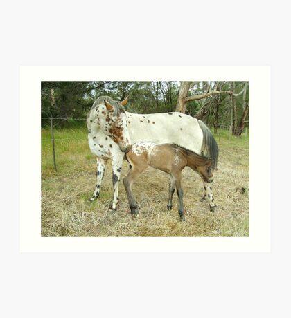 Appaloosa Mare & Foal Art Print