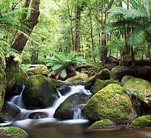 Beeches waterfall, Marysville by Vicki Moritz