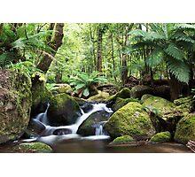 Beeches waterfall, Marysville Photographic Print