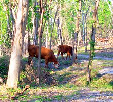 Texas Cattle Pasture by DottieDees