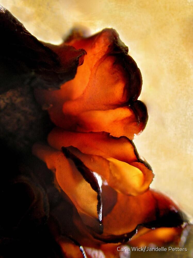 Jellied Abstract by Carla Wick/Jandelle Petters