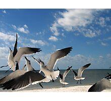 Seagull Aerobatics Photographic Print