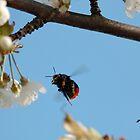 Bumblebee in Flight  by Stanislav Sokolov