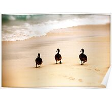 A waddle down the beach  Poster