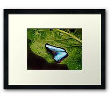 blue on green Framed Print