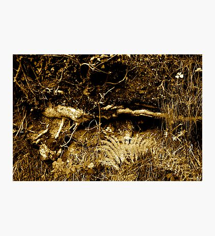 Rooted 16 Photographic Print