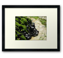 Sundrenched Muscles Framed Print