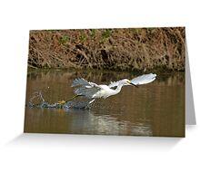 Snowy Egret #1 Greeting Card