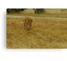 The Chase part 2 Canvas Print
