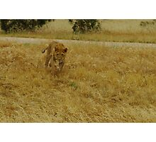 The Chase part 2 Photographic Print