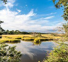 Green Marsh Grasses Under Blue Sky by dbvirago