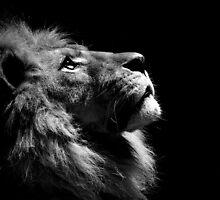 lion  by El-Dino