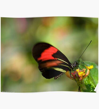 butterfly bokeh Poster