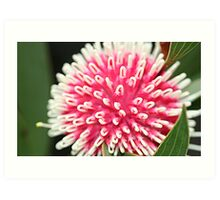 What the Hakea is that? Art Print
