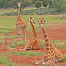 Group of Giraffes by Jenny Brice