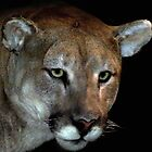 Mountain Lion by Dennis Begnoche Jr.