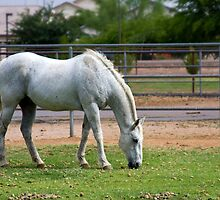 At Pasture by Sue  Cullumber