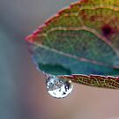 Forever Autumn by Gayle Dolinger