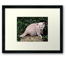 Wild Bill Kitten first outside adventures Framed Print