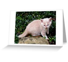 Wild Bill Kitten first outside adventures Greeting Card