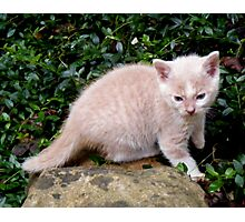 Wild Bill Kitten first outside adventures Photographic Print
