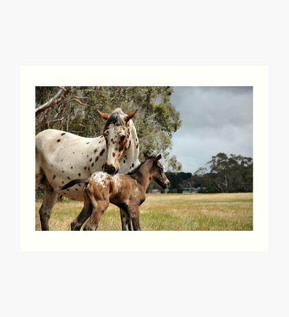 Appy foal Art Print