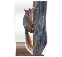 The Amazing, Spiderman Squirrel!!! Poster