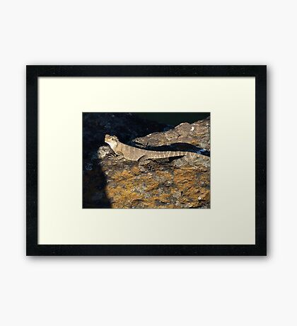 Water Dragon Framed Print