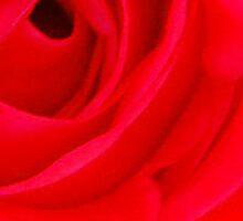 Rosey red petals Sticker