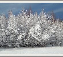 Framed by Frost by Karen Cook