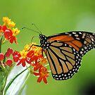 Monarch in Green II by Donna Adamski