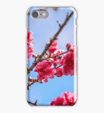 Pink Blossoms Against a Blue Sky iPhone Case/Skin
