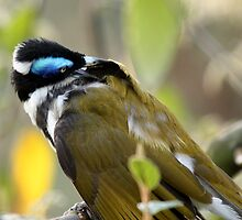 Blue-Faced Honey Eater by Margot Kiesskalt
