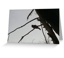 Honey Eater In Tree. Greeting Card