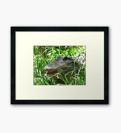 """Saltwater Crocodile"" Framed Print"