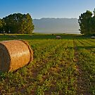 Harvest time by the lake Kerkini by Konstantinos Arvanitopoulos
