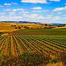 Truro Vines,South Australia by rochelle