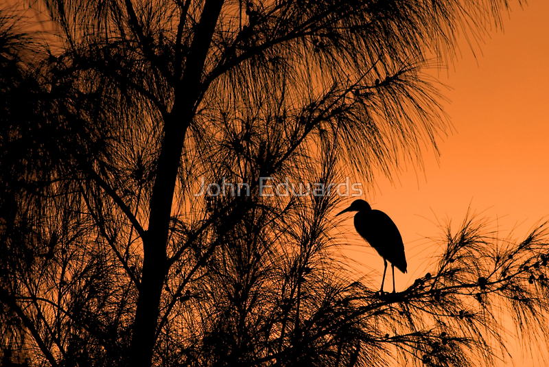 Jamaican Twilight by John Edwards