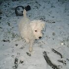 Puppy in Snow by karenuk1969