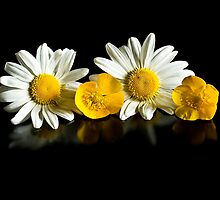 Buttercups and daisies by mausue