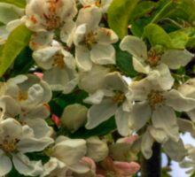 Blossoms Sticker